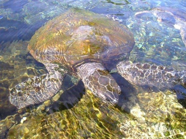 tortugas (3)