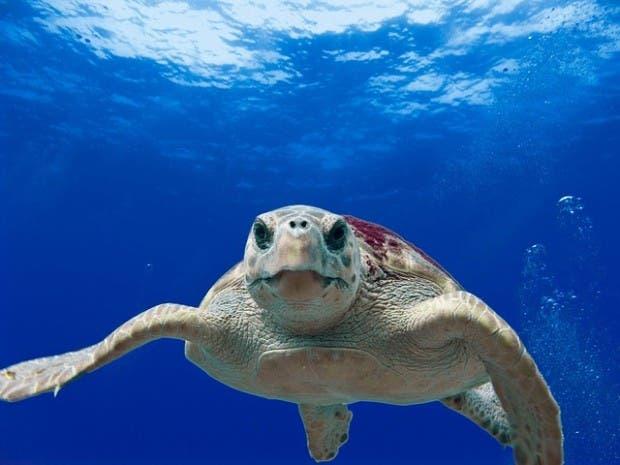 tortugas (4)
