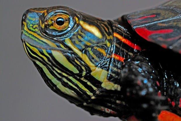 tortugas (5)