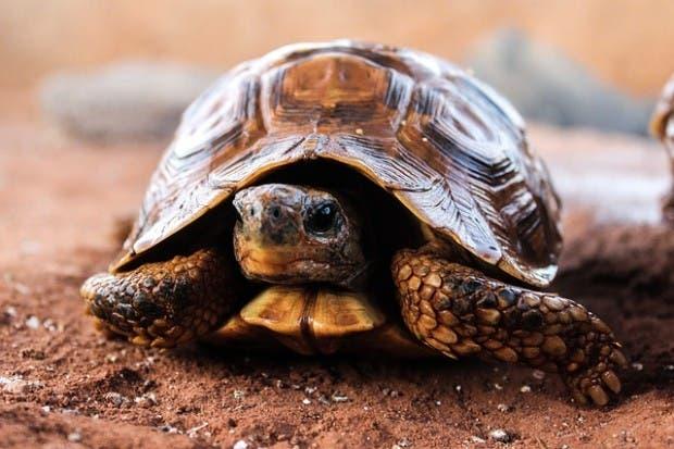 tortugas (7)