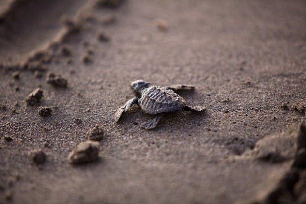 tortugas (9)