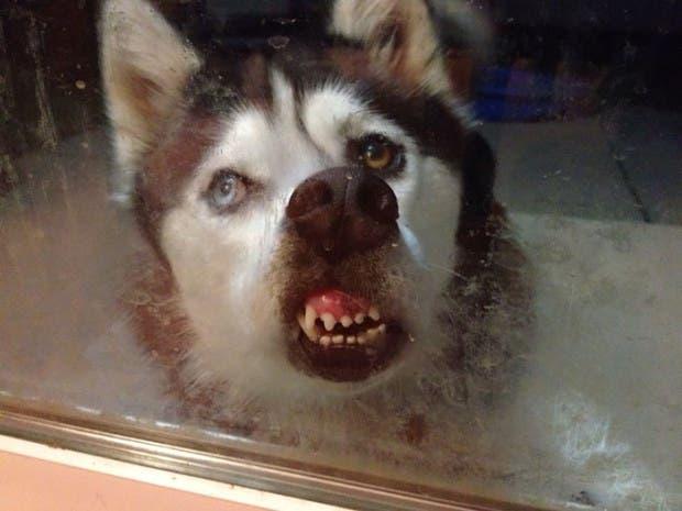 animales divertidos en vifrios alaska