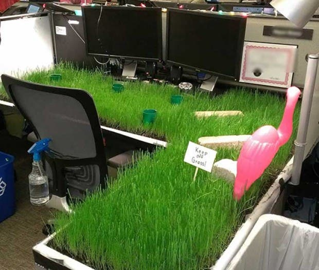 bromas jardin