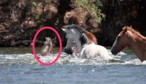 caballo-salva-potrillo