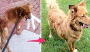 cambio-perro-rescatado