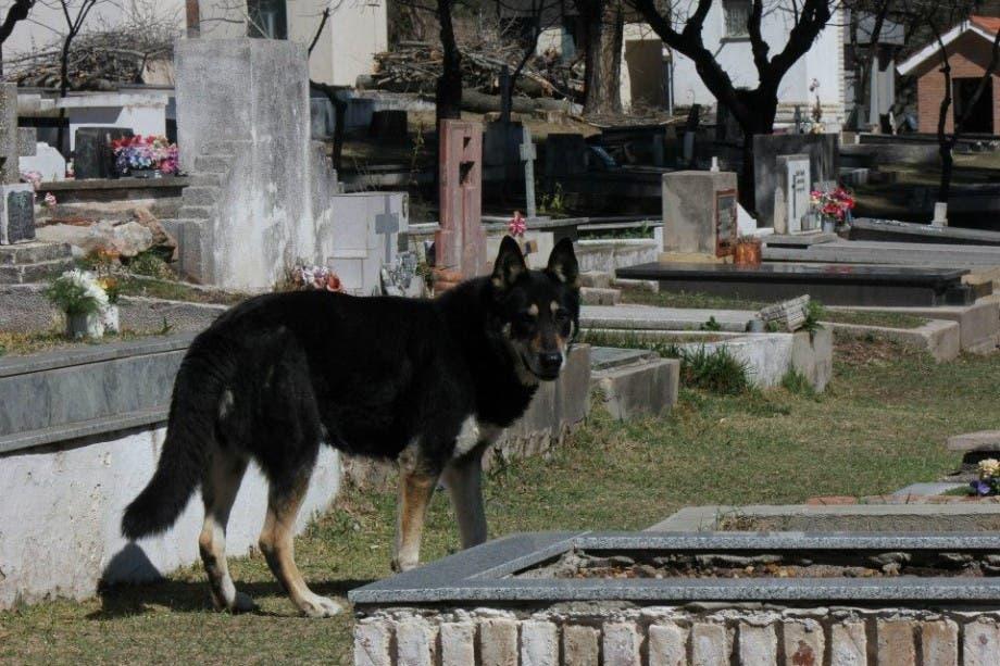 capitan el perro que cuida la tumba de su amo (6)