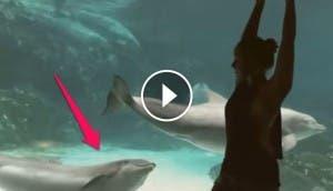 delfin-piruetas-