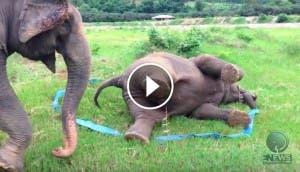 elefante-feliz-jugando-play