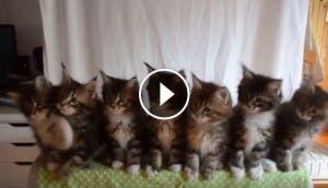 gatitos-hermanos-sincronia