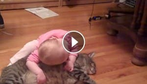 gato-cariñoso-bebe