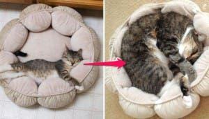 gatos-creciendo-