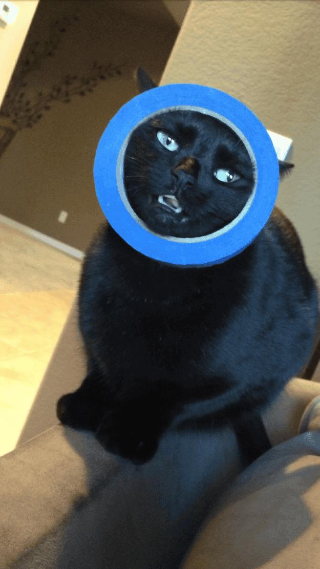 gatos-que-tomaron-malas-decisiones-1