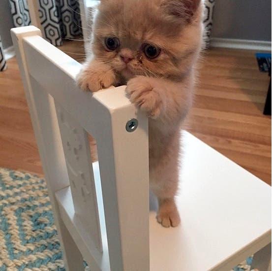 george-cat