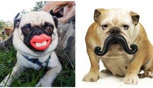juguetes-perros-divertidos