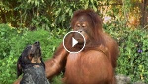 mensaje-de-android-gorila-perro