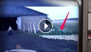patos-obedientes-video