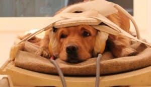 perpectiva-canina-