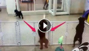 perrito-reencuentro-dueno