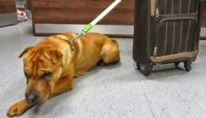 perro-abandonado-en-el-tren