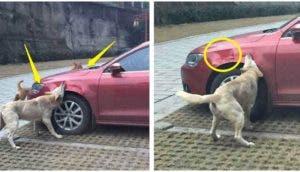 perro-amigos-destruyen-auto-de-quien-lo-maltrato (2)