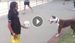 perro-juega-pelota-play
