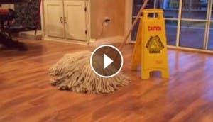 perro mop