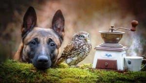 perro-y-buho-amigos-8-620x413