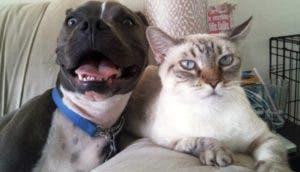 perros-gatos-mejores-amigos