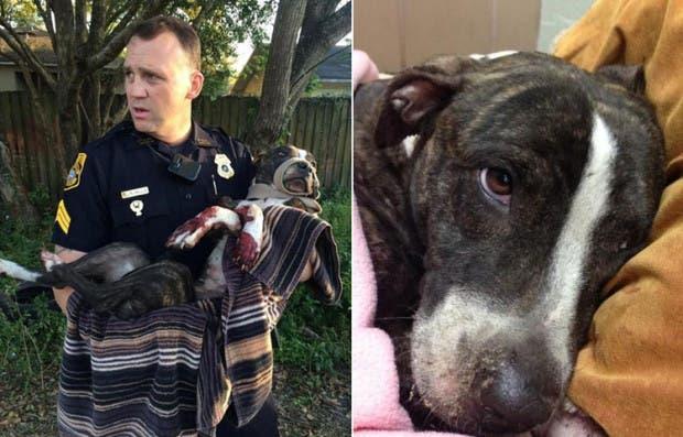 policia-salva-perro-disparado-y-atado-via-tren