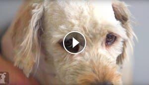 rasuran-charlie-perro-play