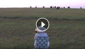 serenata-vacas-granjero