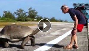 tortuga-gigante-
