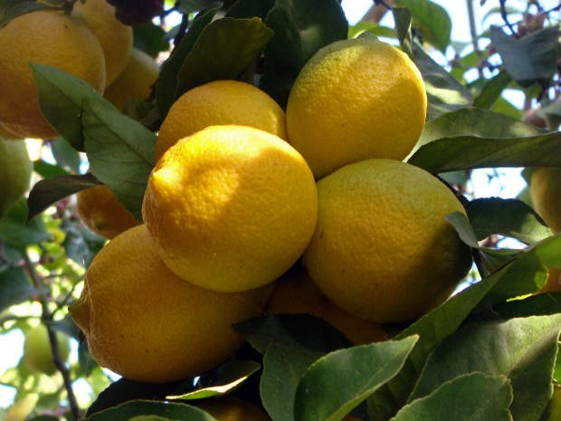 El limón tiene muchísimas propiedades y beneficios