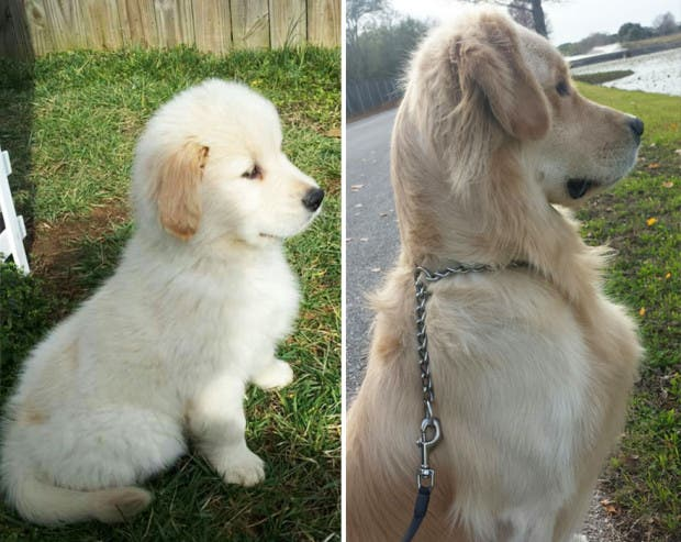 XX-before-and-after-dogs-growing-up-__880