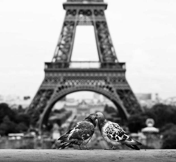 animal-love-friendship-31__880