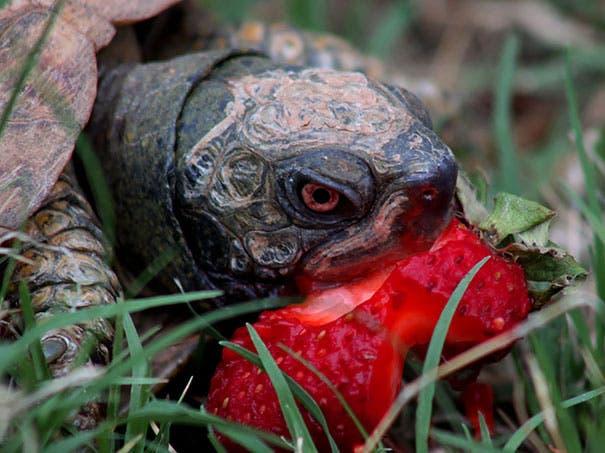 animals-eating-berries-41__605
