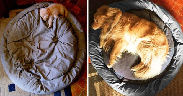 dogs-before-and-after-421__880