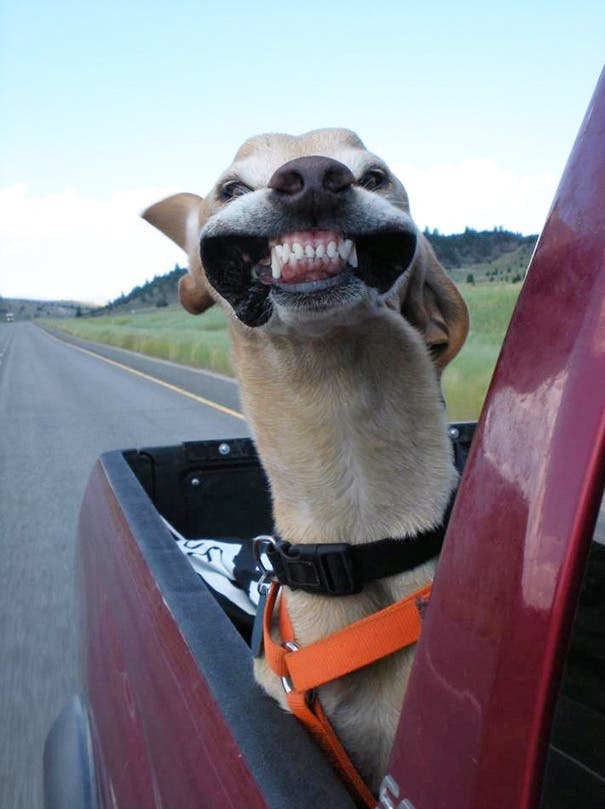 dogs-on-joyrides-1__605