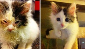 gatitos-lastimados