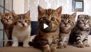 gatitos-tiernos-video
