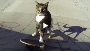 gato-patinador-calle2