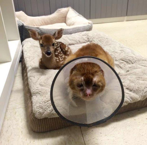 gato rescatado del fuego6