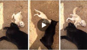 gato-zorro-amigos