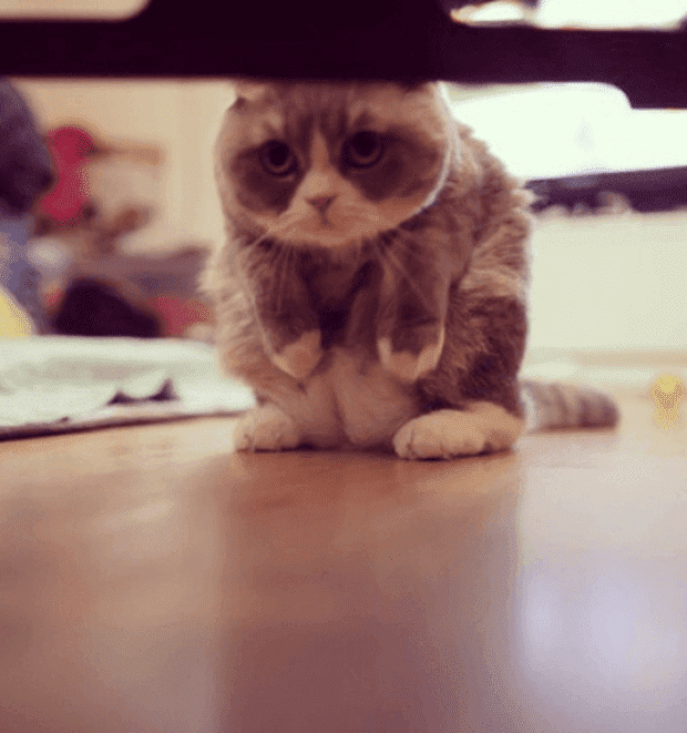 gatos rebeldes sentados