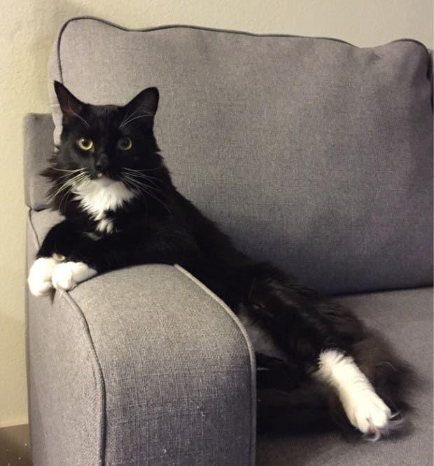 gatos rebeldes sentados11