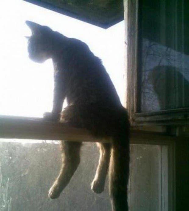 gatos rebeldes sentados12