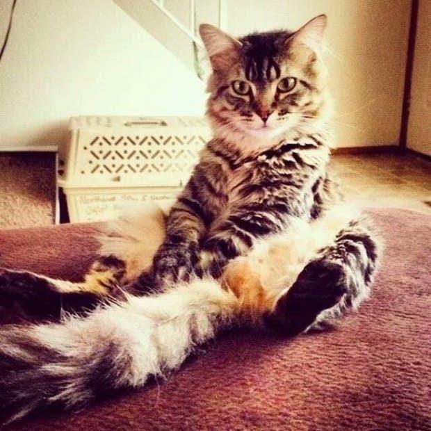 gatos rebeldes sentados7
