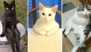 gatos-sentados-chistosos