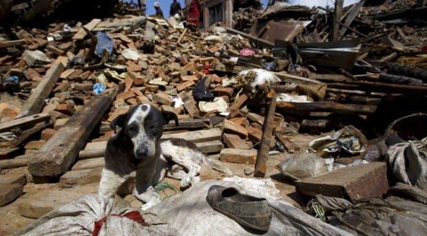 mujer-ayuda-perros-nepal-terremoto-escombros
