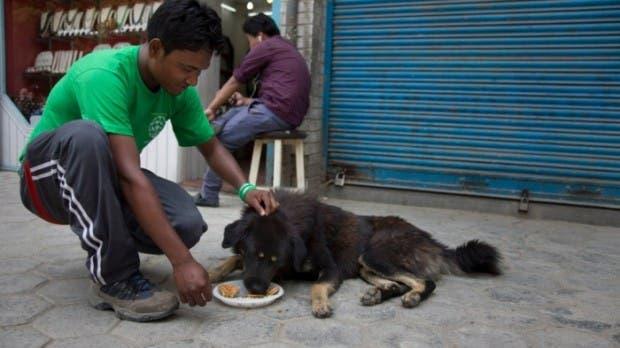 mujer-ayuda-perros-nepal-terremoto-hambre